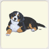 Bernese Mtn Dog Puppy Coasters