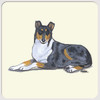 Smooth Collie Coasters