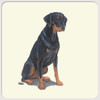 Doberman Uncropped Coasters