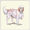 English Setter Red Coasters