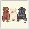 Labrador Retriever Trio Beverage Coasters