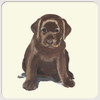 Chocolate Labrador Puppy Coasters