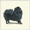 Black Pomeranian Coasters