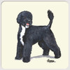 Portuguese Water Dog Beverage Coasters