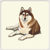 Brown & White Siberian Husky Christmas Cards