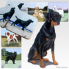 Doberman Pinscher Uncropped Scenic Coasters