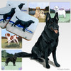 Black German Shepherd Scenic Coasters