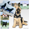 German Shepherd Puppy Scenic Coasters