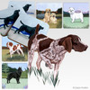 German Shorthair Pointer Scenic Coasters