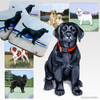Black Lab Puppy Scenic Coasters