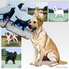 Yellow Lab Oval Scenic Coasters
