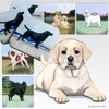Yellow Lab Pup Scenic Coasters