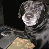 June 21st Is National Take Your Dog to Work Day