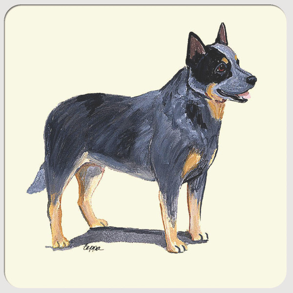 Australian Cattle Dog Beverage Coasters