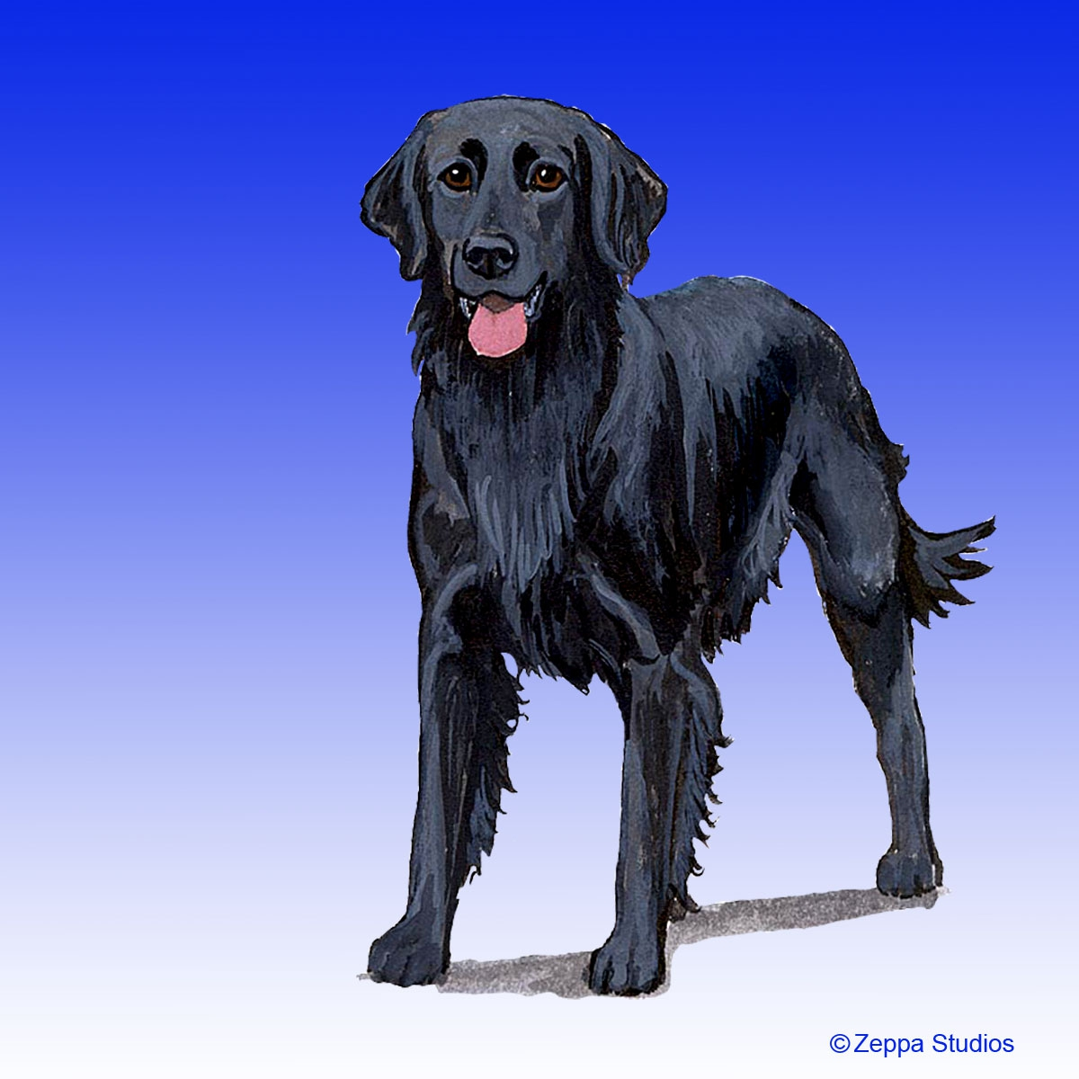 Flat Coated Retriever Gifts