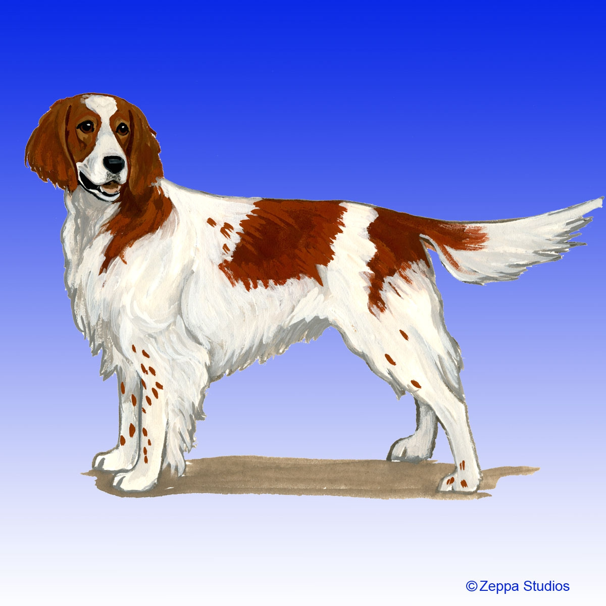 Irish Red & White Setter Gifts