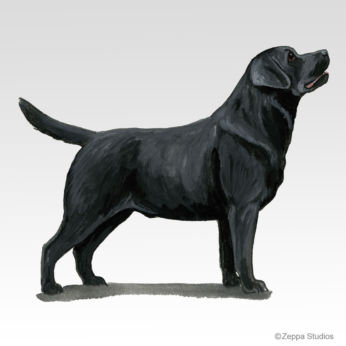 Labrador Retriever, Black Gifts