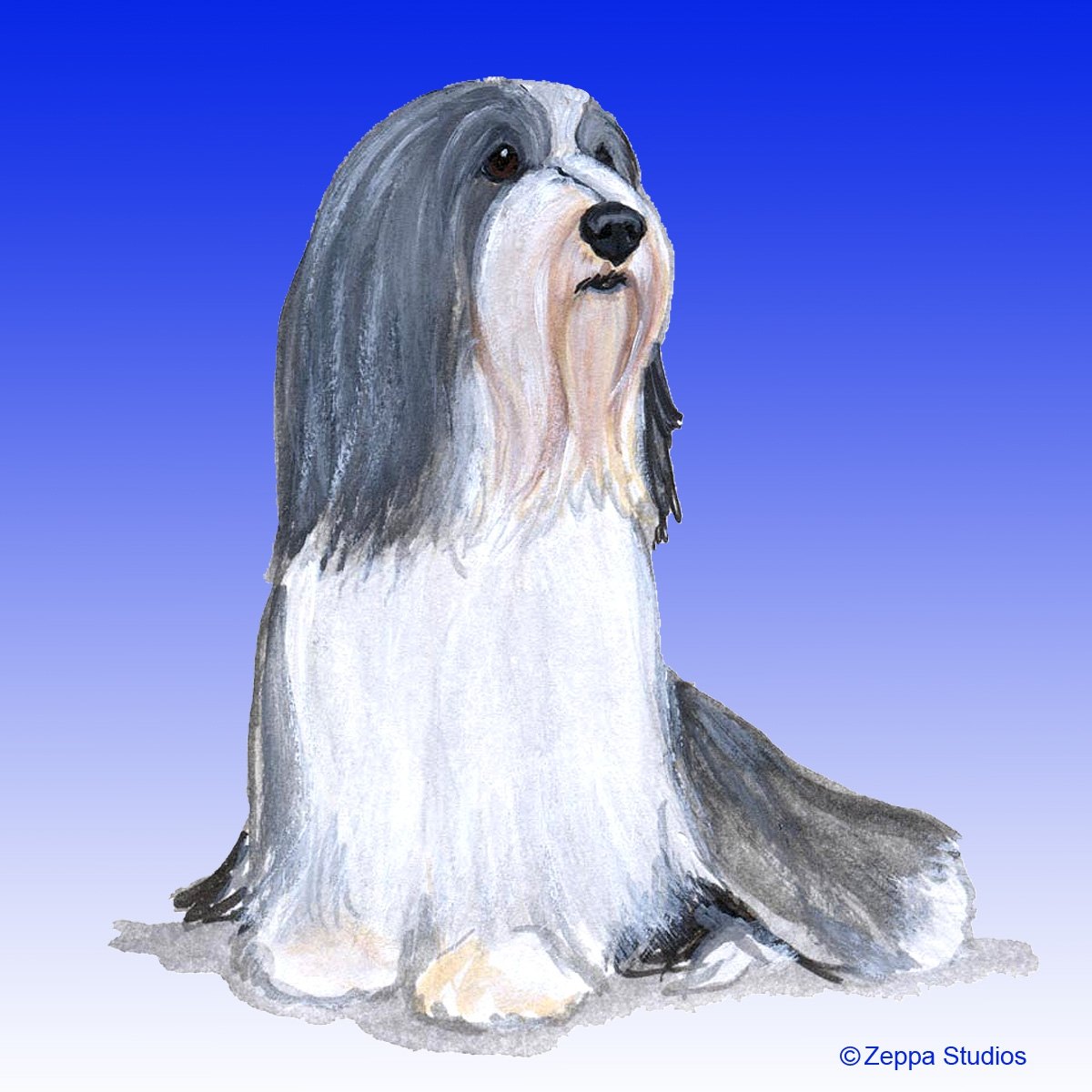 Bearded Collie Gifts