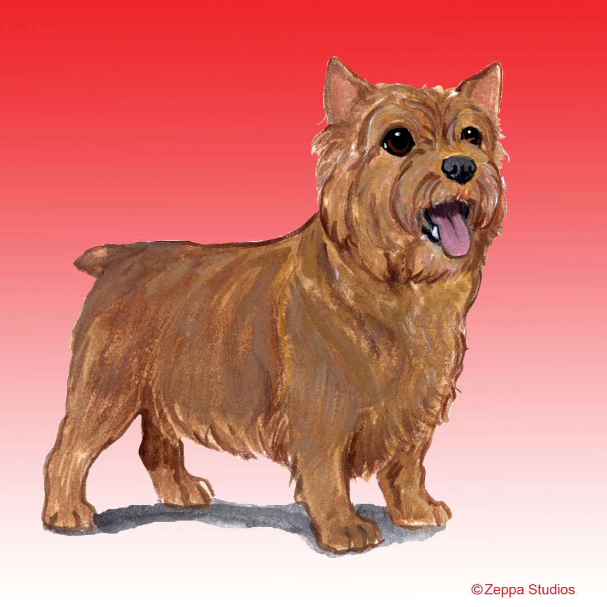 Norwich Terrier Gifts