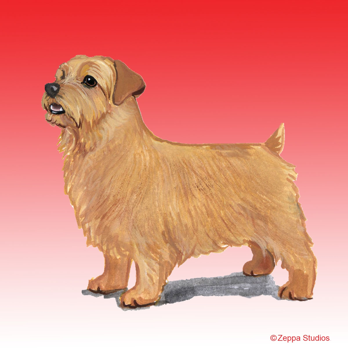 Norfolk Terrier Gifts