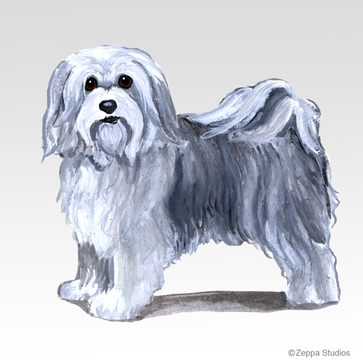 Havanese Gifts