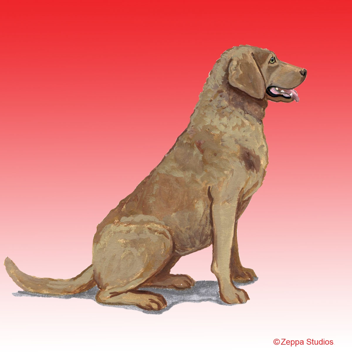 Chesapeake Bay Retriever Gifts
