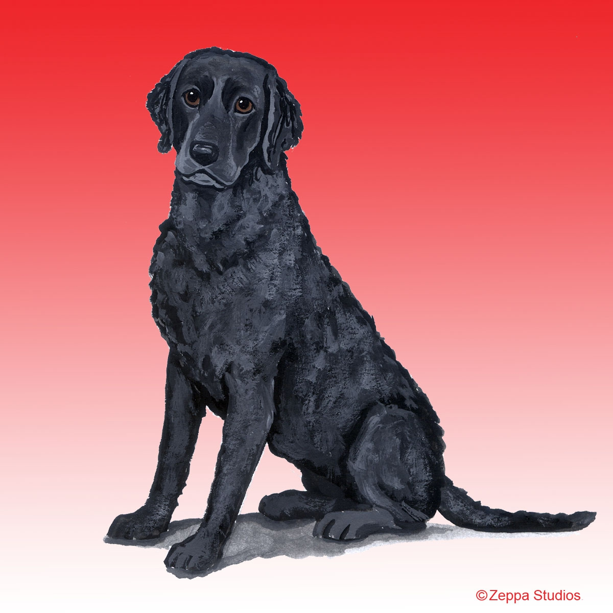 Curly Coated Retriever Gifts