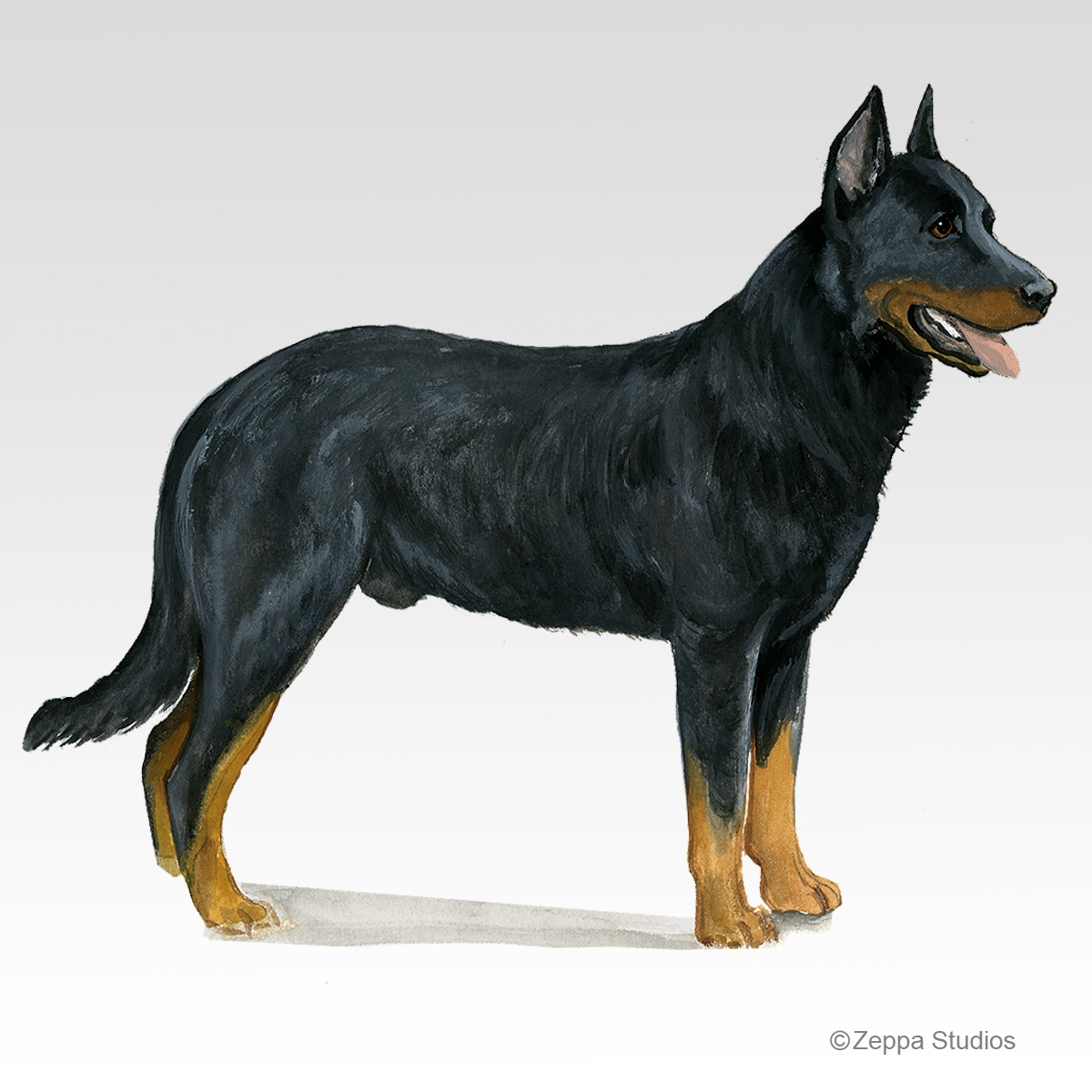 Beauceron Gifts