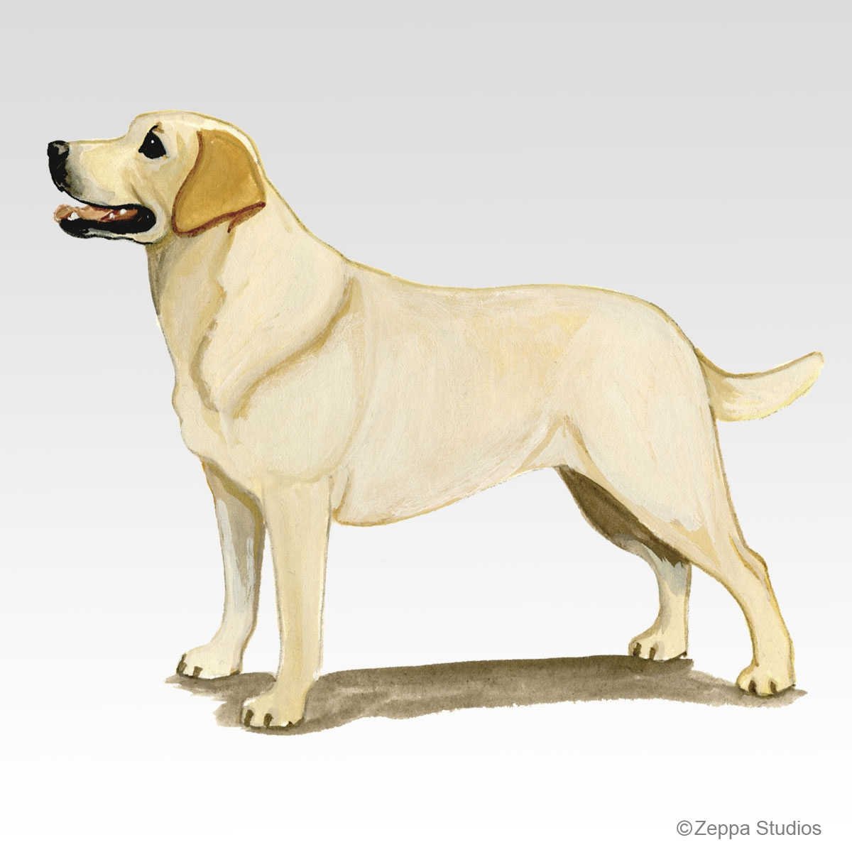Labrador Retriever, Yellow Gifts