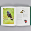 Pages from the book The Backyard Birdwatcher's Bible