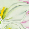 O'Keeffe: Two Calla Lilies on Pink Archival Poster, detail
