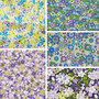LIBERTY FABRICS, CARNABY COLLECTION Daydream - FQ Bundle of 5 fabrics - ELEGANTE VIRGULE CANADA, Canadian Quilting Shop - Liberty of London, Quilting Cotton