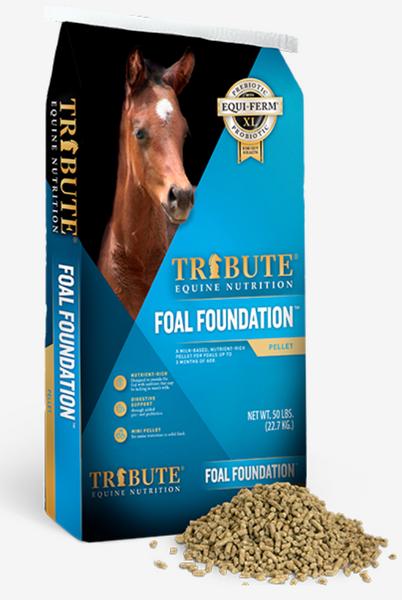 Foal Foundation