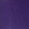 Concord Grape #62
