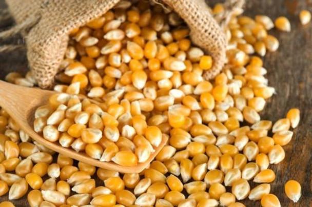 Maíz Pisingallo Corn Grains Corn Kernel Seeds Large Bag Perfect Popping for Popcorn at Home!, 5 kg / 11.02 lb Family Bag
