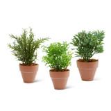 Assorted Herbs in Clay Pots, Set of 3