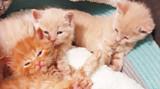 Kittens Rescued on Dock