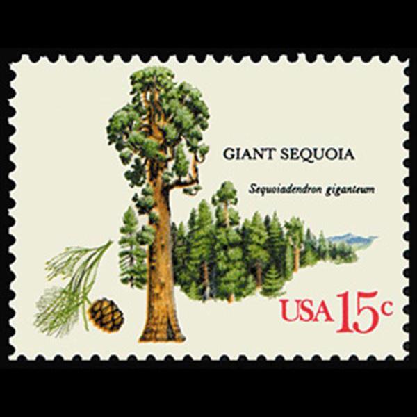 1978 15c Giant Sequoia Mint Single