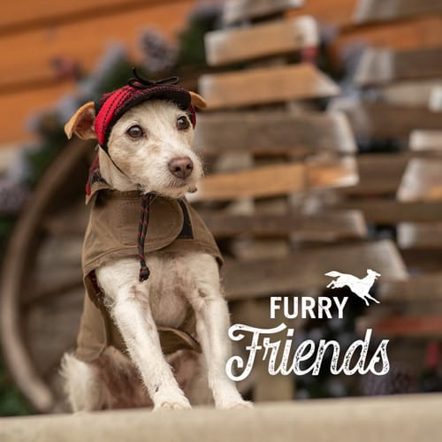 Stormy Kromer Gifts for Pets