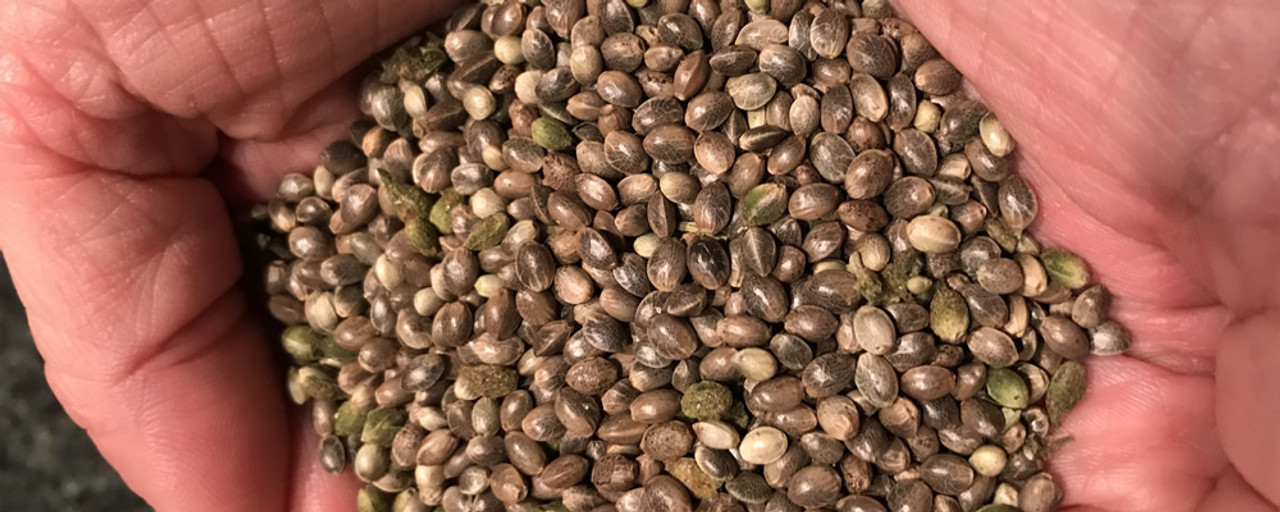 Vermont Hemp and CBD Products. Picture of hemp seeds used to grow our organic hemp and CBD
