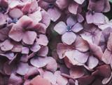 Terpene Tuesday: Terpinolene