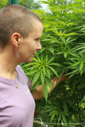 Cannabis Cultivar: Blueberry Muffins