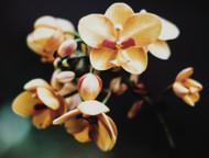 Terpene Tuesday: Ocimene