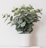 Terpene Tuesday: Eucalyptol