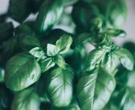 Terpene Tuesday: Carene