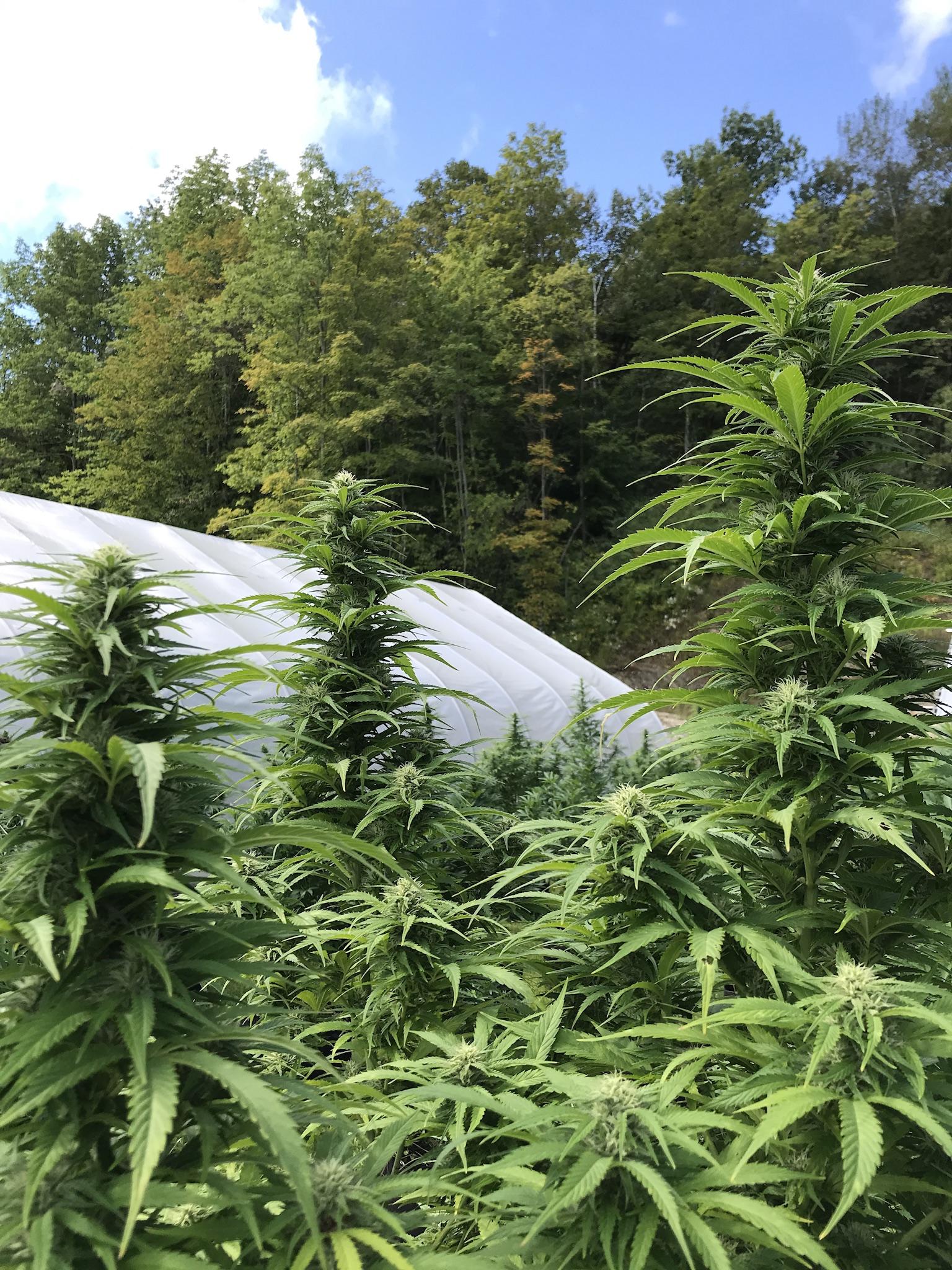 Our hemp farm