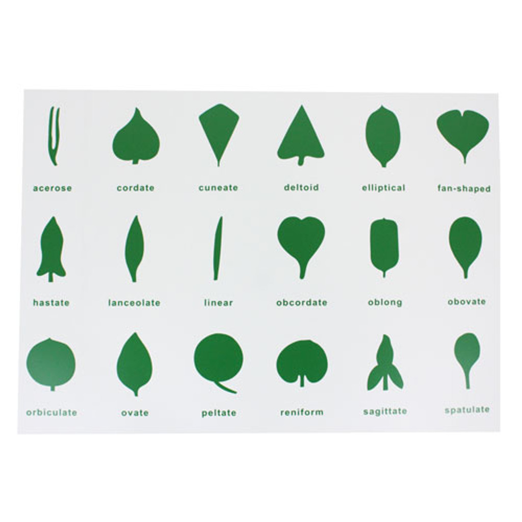 Leaf Shapes Control Chart