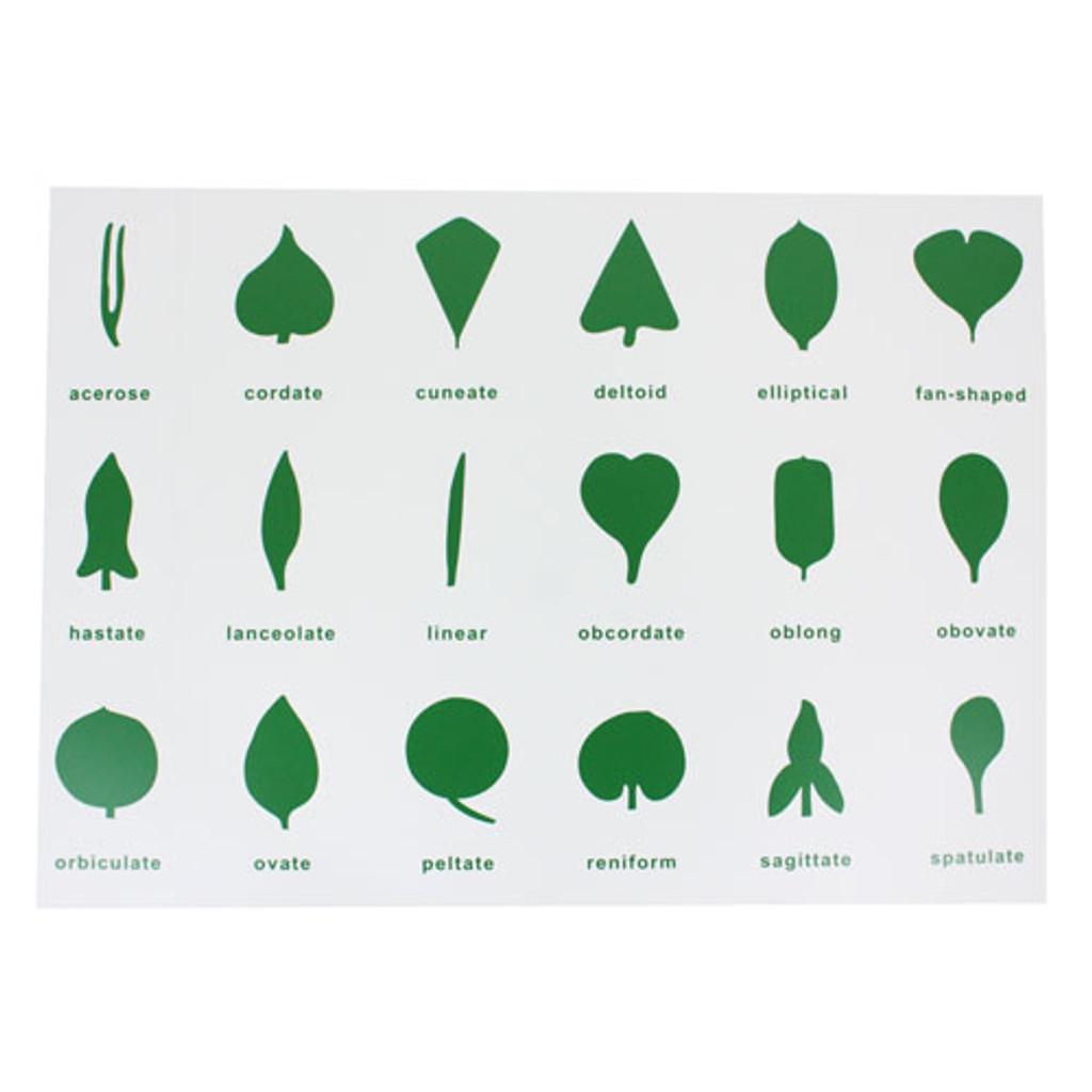 Leaf Shapes Control Chart
