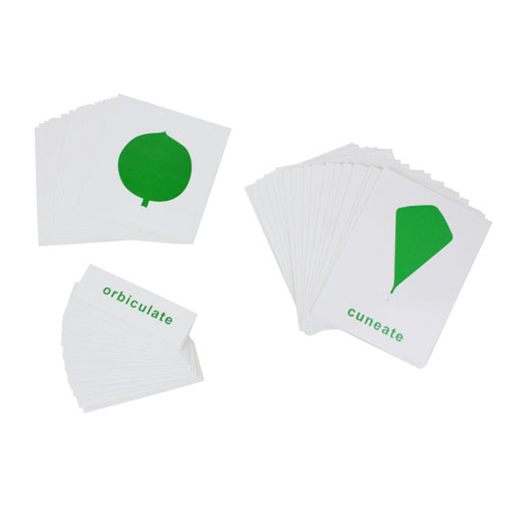 Leaf Shapes Nomenclature Cards