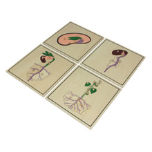 Growing Process Puzzle Set